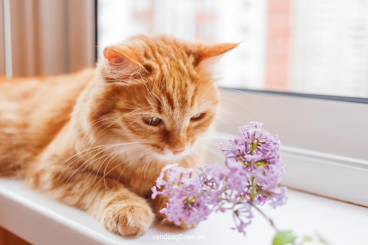 giftige planten en bloemen voor poezen beeld